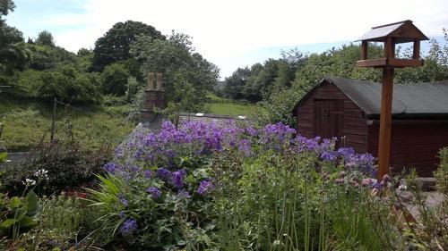 Garden with wild birds, butterflies and flowers