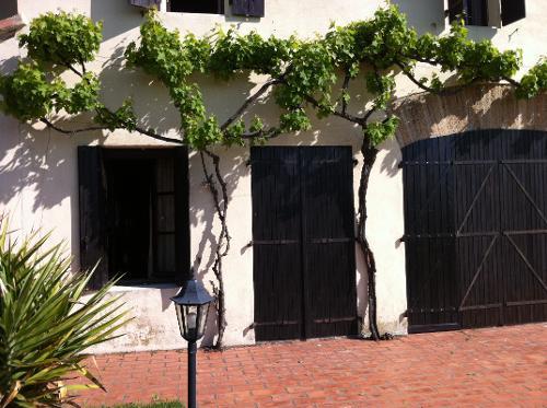 Muscat Grapevine on front of Domaine de Favette