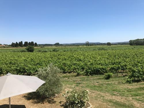 View from front bedrooms over vineyards